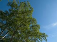扇沢にて。とてもいい天気でした。